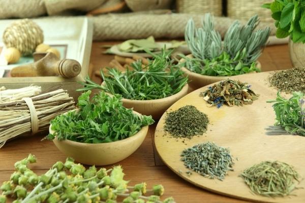 лечебные травы в мисках