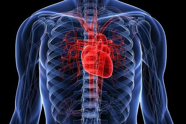 сердце на схеме