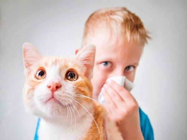 ринит на кошек