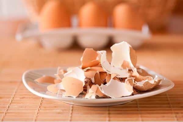 яичная скорлупа на тарелке