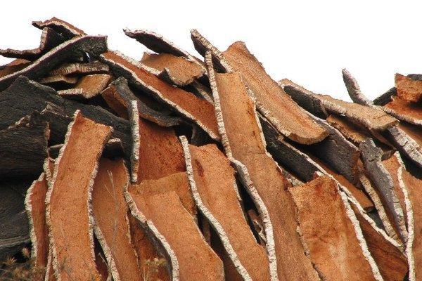 внешний вид коры дуба