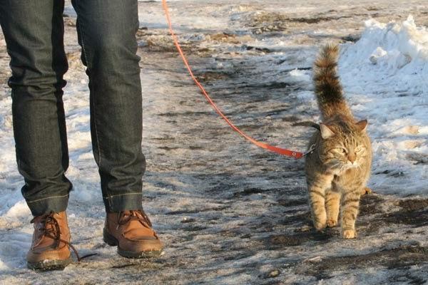 мужчина гуляет с кошкой