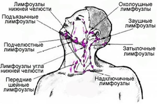 схема лимфоузлов шеи