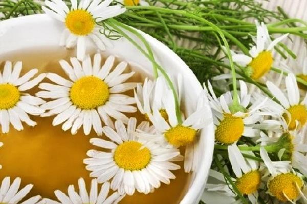 цветки ромашки в миске