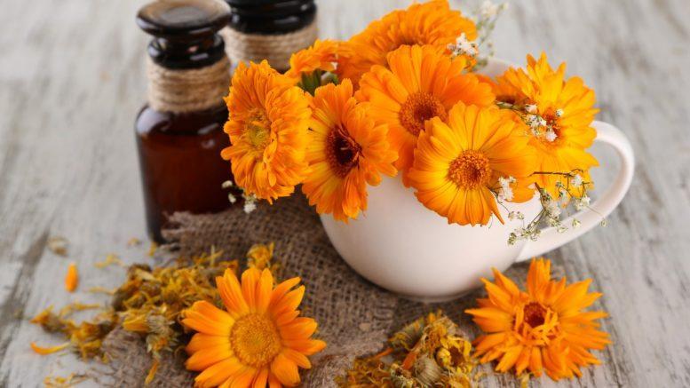цветы каледулы