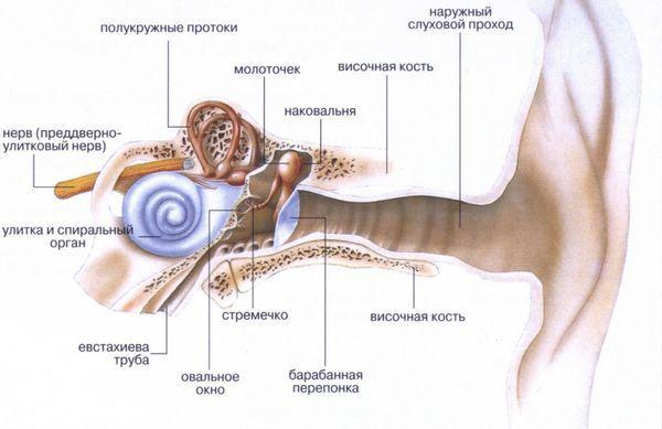 Евстахиит (тубоотит)
