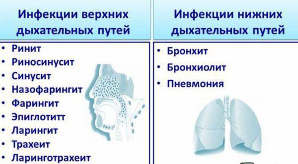 Верхние дыхательные путеи