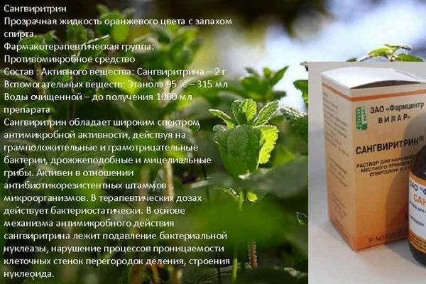 описание препарата сангвиритрин